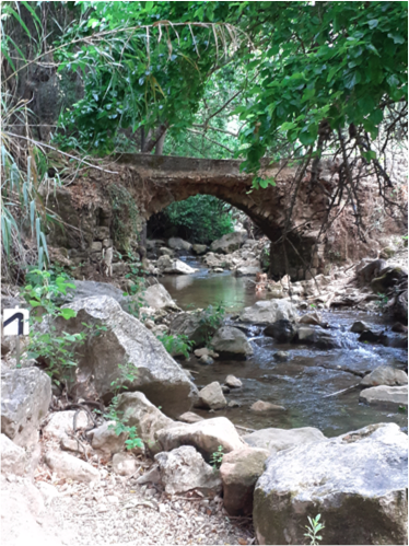 Read more about the article Day 6, Shvil Yisrael: Nahal Amud (19 km)
