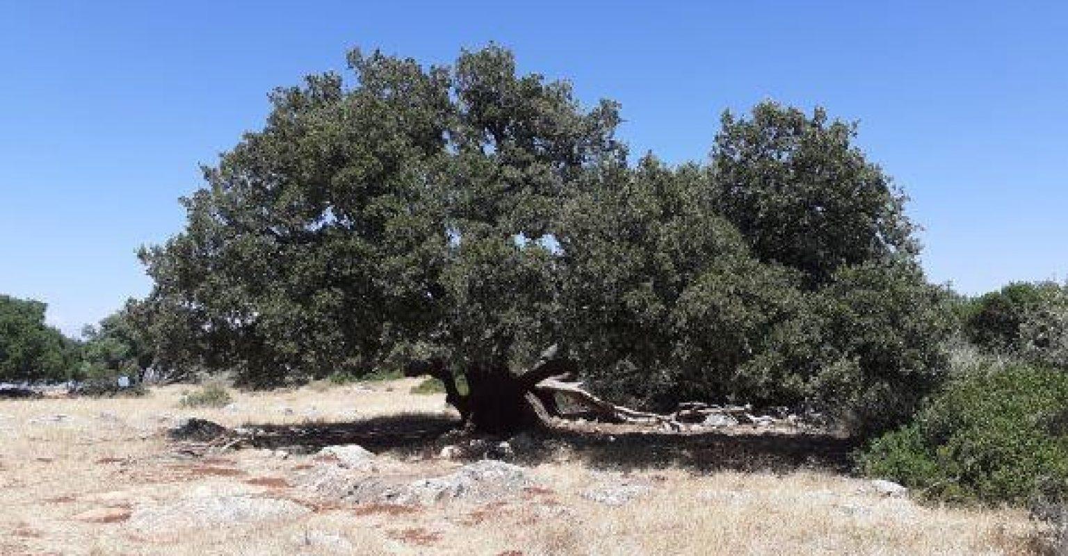Day 2 tree